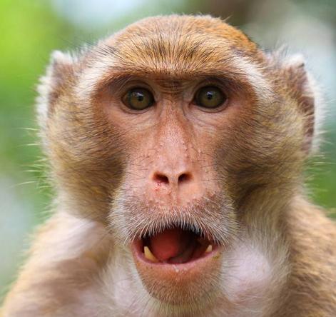 妈的,写之前不说,写完了了你说不行.中途我还问你你说对.你真是中国第一 Monkey